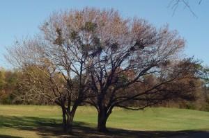 November 24 2013 trees 040